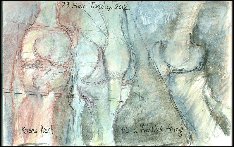 May29_2012_knees front_its a tibular thing