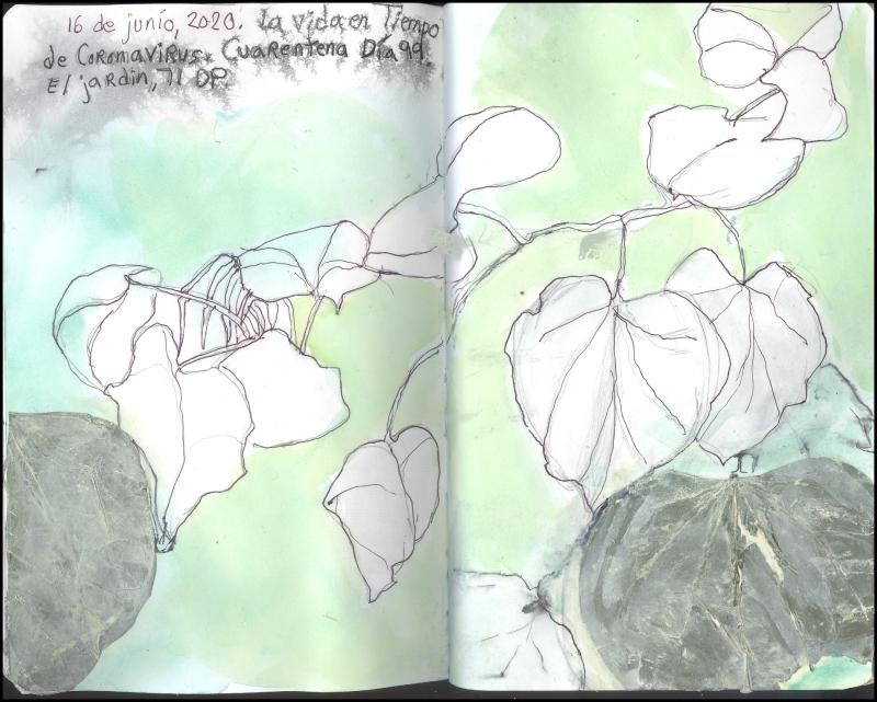 June16_2020_brooklyn_jardin