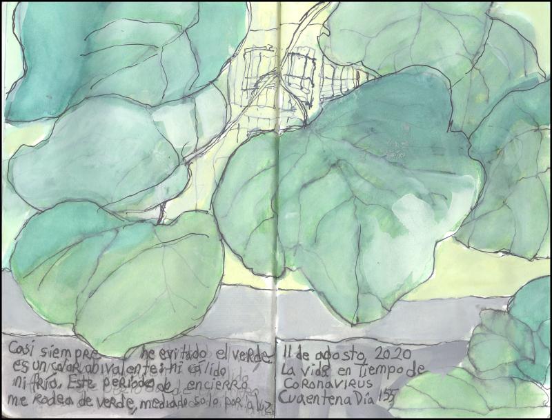 August11_2020_verde es abivalente